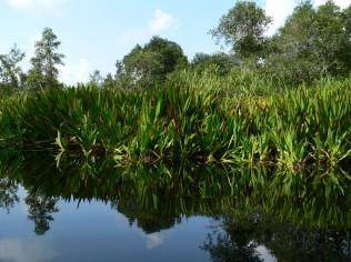 Natural Habitat Tanjung Puting