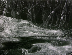 Incredible scratchboard drawing by John Agnew